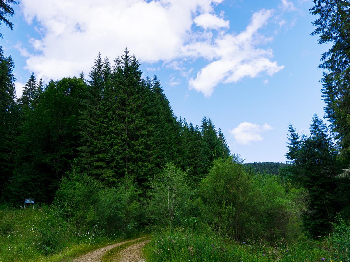 #13 Haihui - Codrul secular Loben - Pădurea Roșoșa