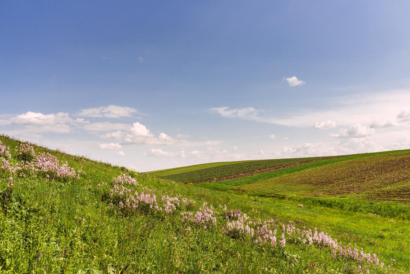 #24 Haihui - Fânețele seculare de la Calafindești - Pădurea Zamostea - Luncă