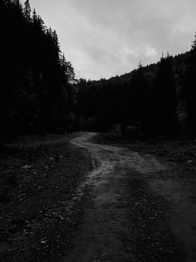#33 Via Transilvanica - Vatra Dornei - Poiana Negrii