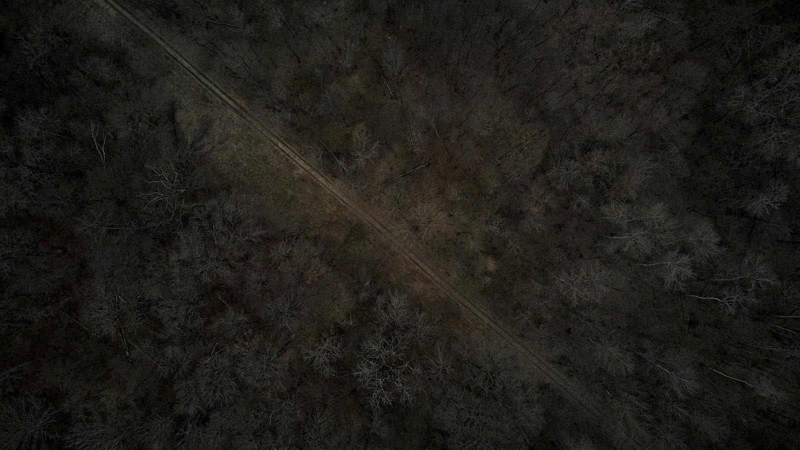 #38 Haihui - Pădurea Zamostea - Lunca